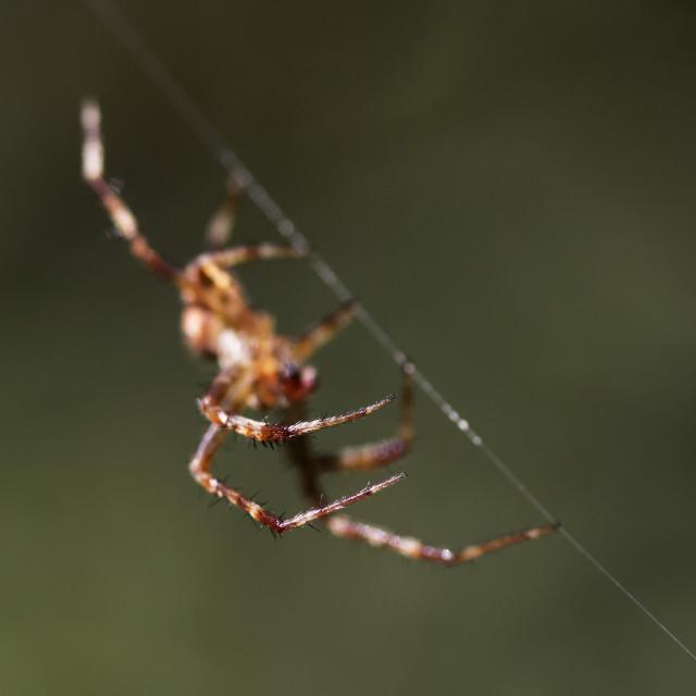 """Spider walk"" stock image"