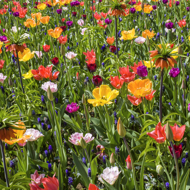 """Background of colorful flowets"" stock image"
