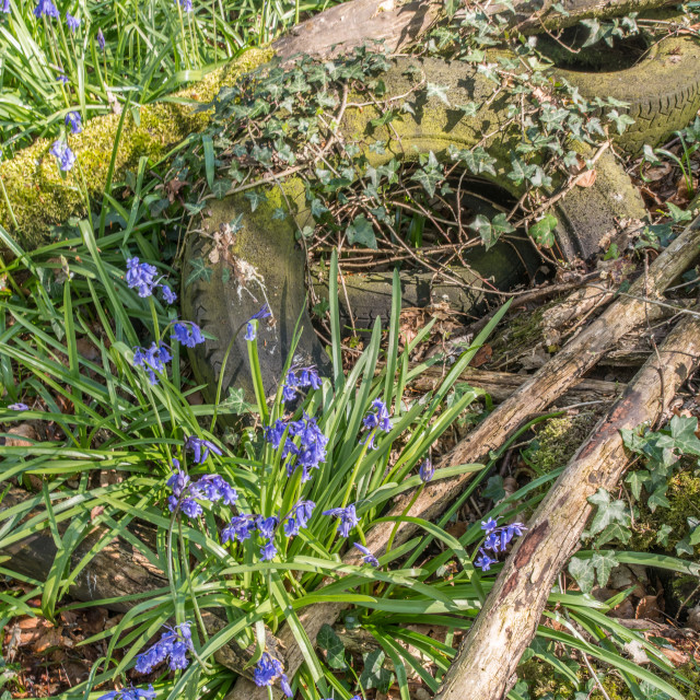 """""""Old Tyres and Bluebells"""" stock image"""