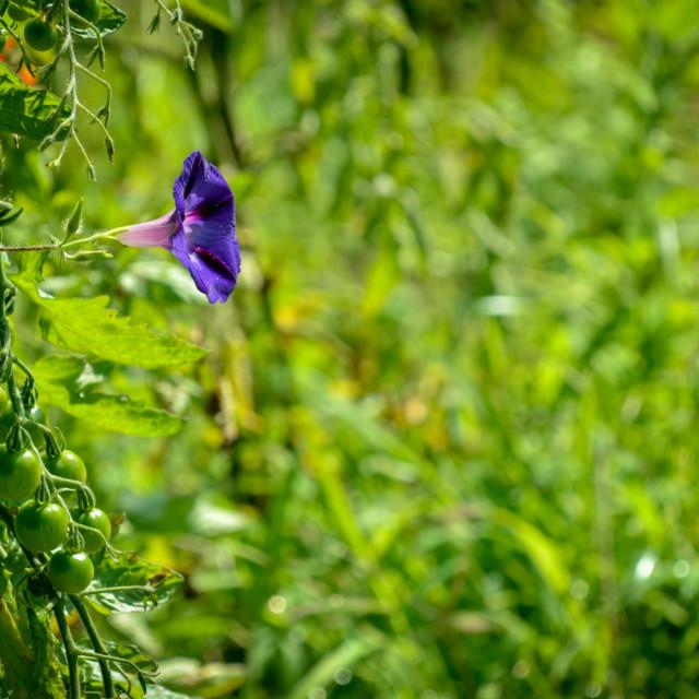 """""""Flower in summer"""" stock image"""