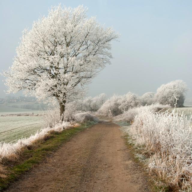 """So so cold Tree"" stock image"