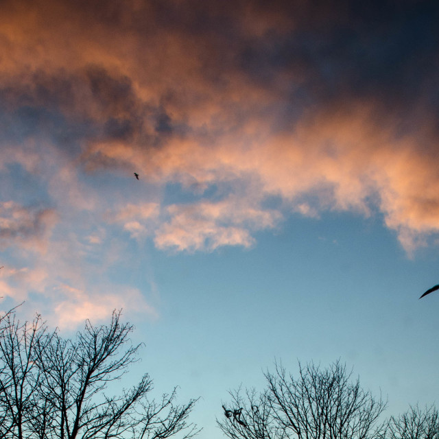 """Birds flying at sunset"" stock image"