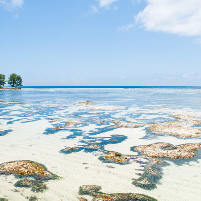 """Reef trees"" stock image"