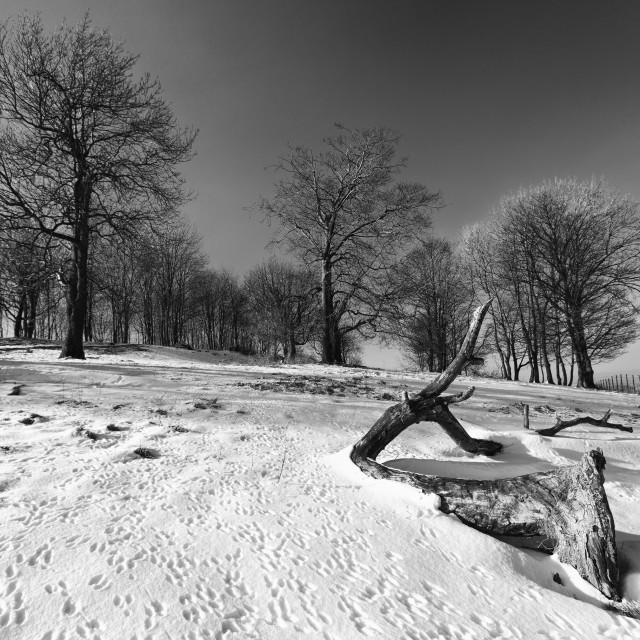 """Chanctonbury Ring"" stock image"