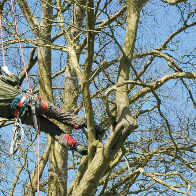 """""""tree climbing"""" stock image"""