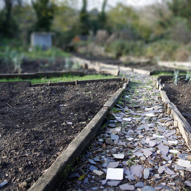 """Allotment path in Autumn"" stock image"