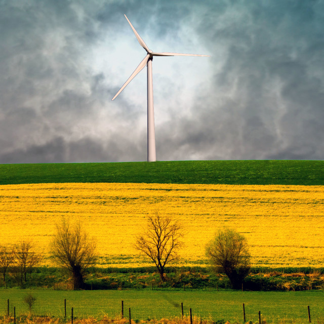 """Wind turbine above a rapeseed field"" stock image"