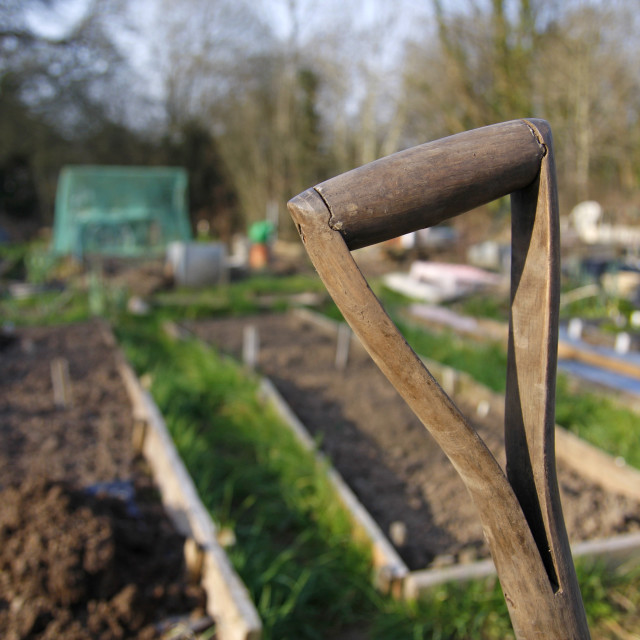 """Old wooden spade handle in an allotment"" stock image"