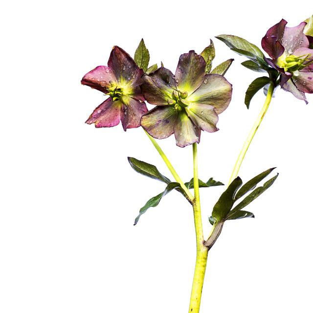 """""""flower."""" stock image"""
