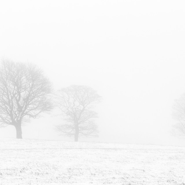 """Trees in the mist"" stock image"