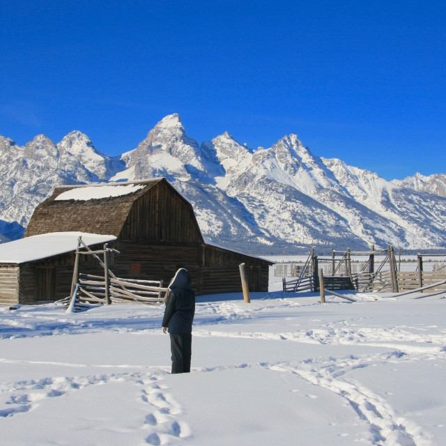 """Mormon Row Grand Teton"" stock image"
