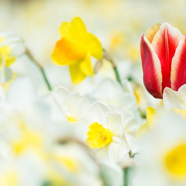 """""""Blossoming stranger"""" stock image"""