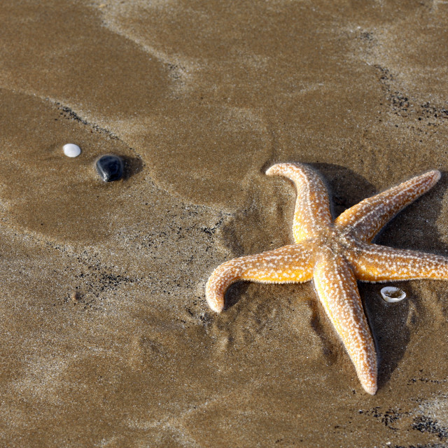 """Starfish on a sandy beach"" stock image"