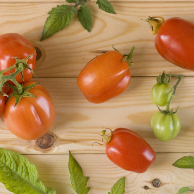 """tomatoes"" stock image"