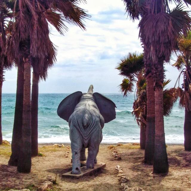 """Elephant on beach"" stock image"