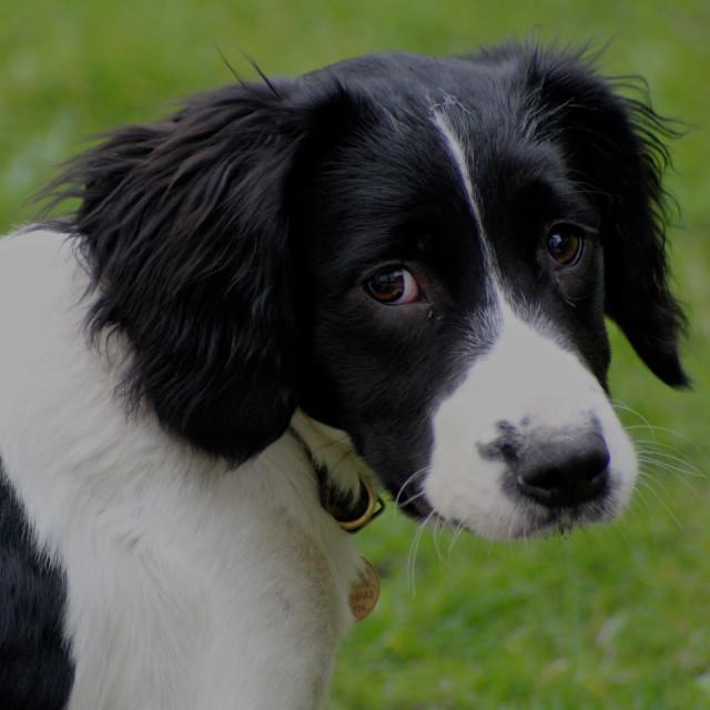 """Puppy Eyes"" stock image"