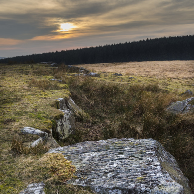 """""""Cup Marked Stone, Hartleyburn Common."""" stock image"""