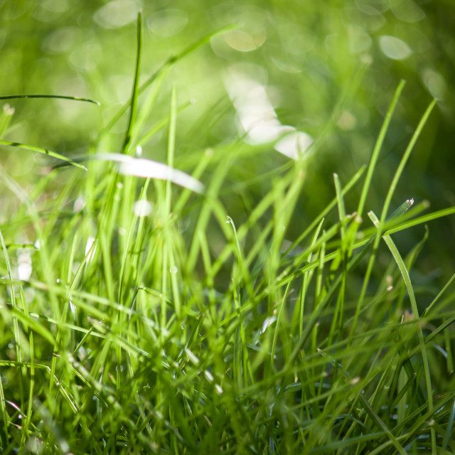 """""""Grass is green #1"""" stock image"""
