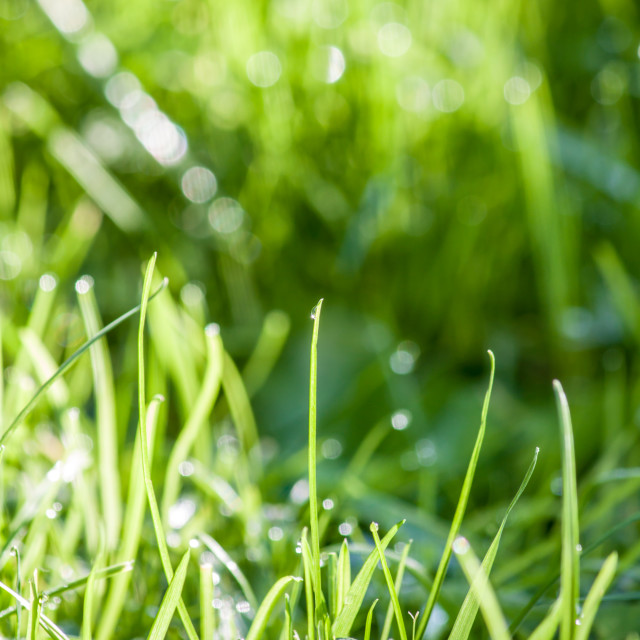 """Grass is green #2"" stock image"