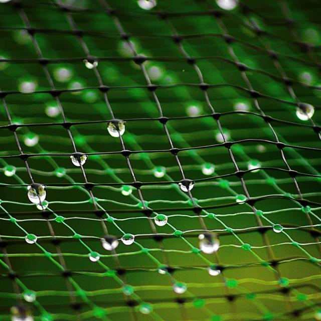 """wet net"" stock image"