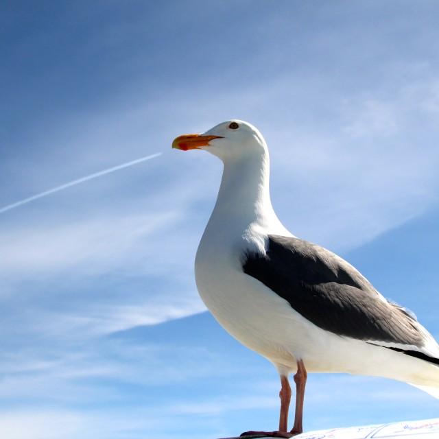 """Super seagull"" stock image"