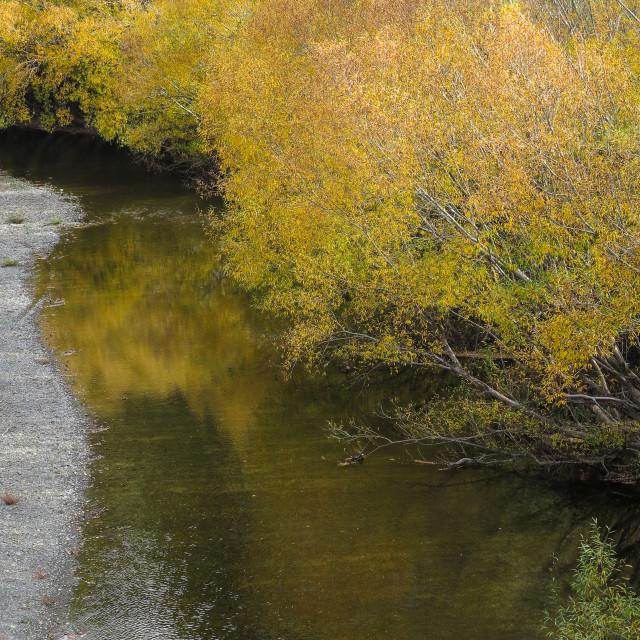 """""""golden autumn"""" stock image"""