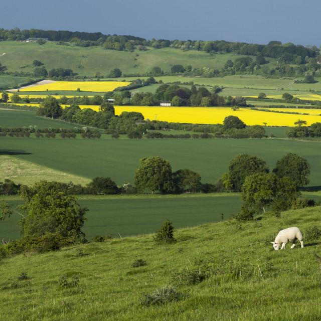 """Hertfordshire landscape"" stock image"