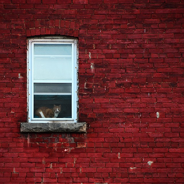 """House Cat"" stock image"