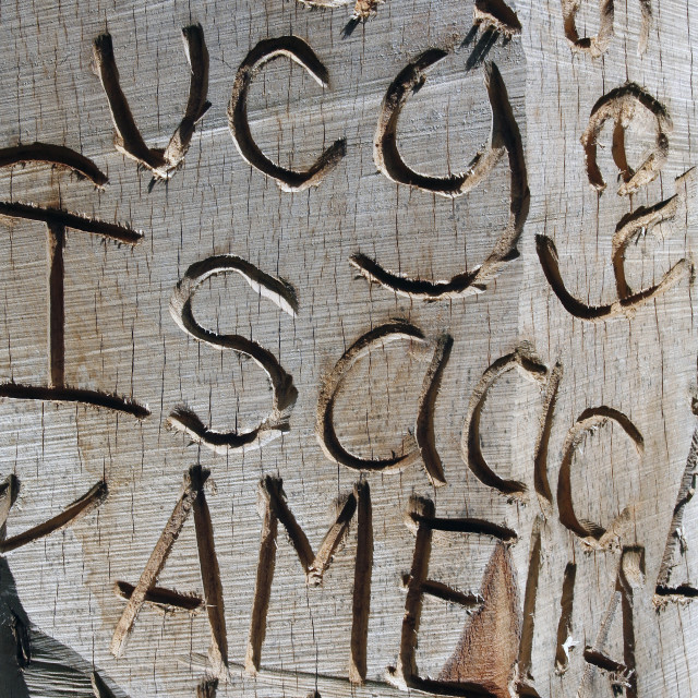 """""""Names carved into wood"""" stock image"""