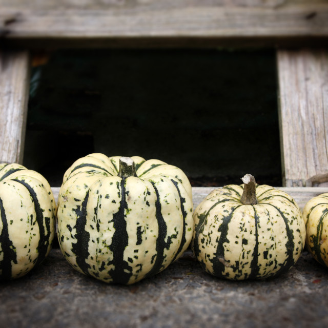 """Row of organic pumpkins"" stock image"