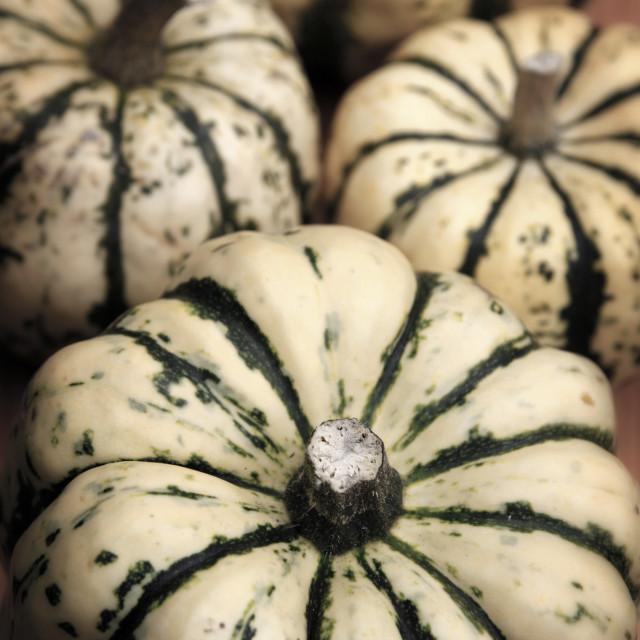 """Organic pumpkins"" stock image"