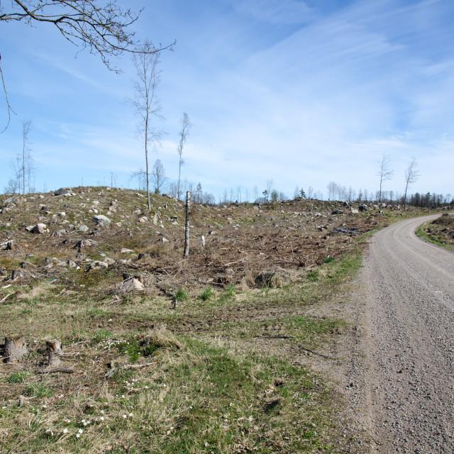 """Deforestation area"" stock image"