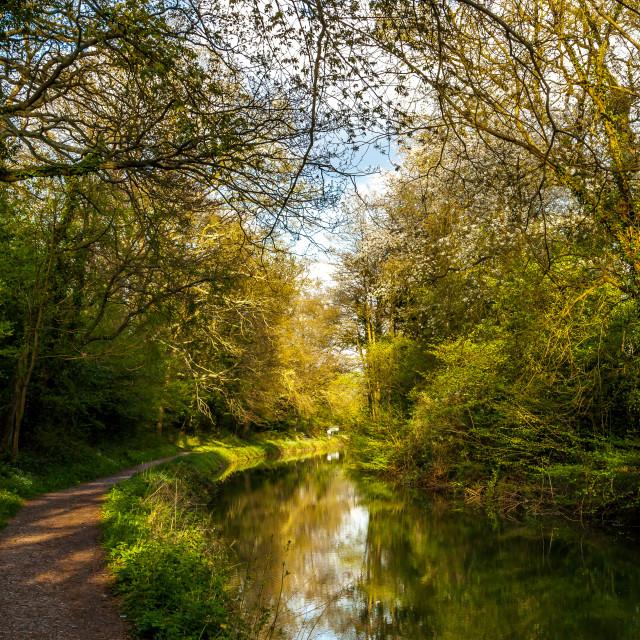 """""""Basingstoke Canal"""" stock image"""