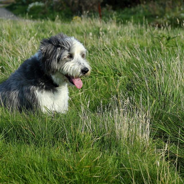"""Dog watch"" stock image"