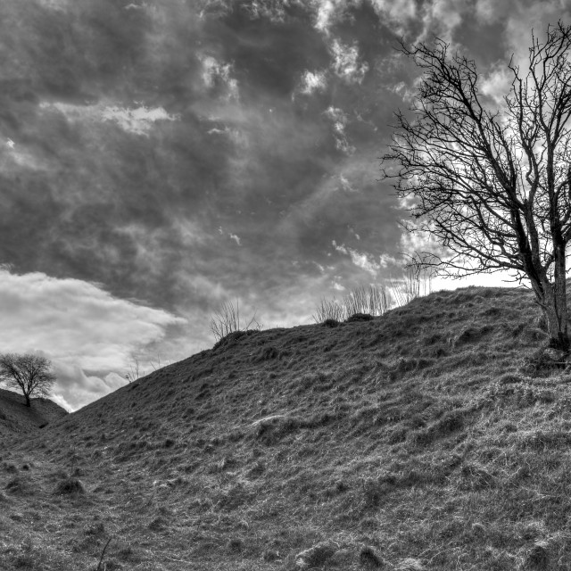 """Scrub trees in a stormy black and white landscape"" stock image"