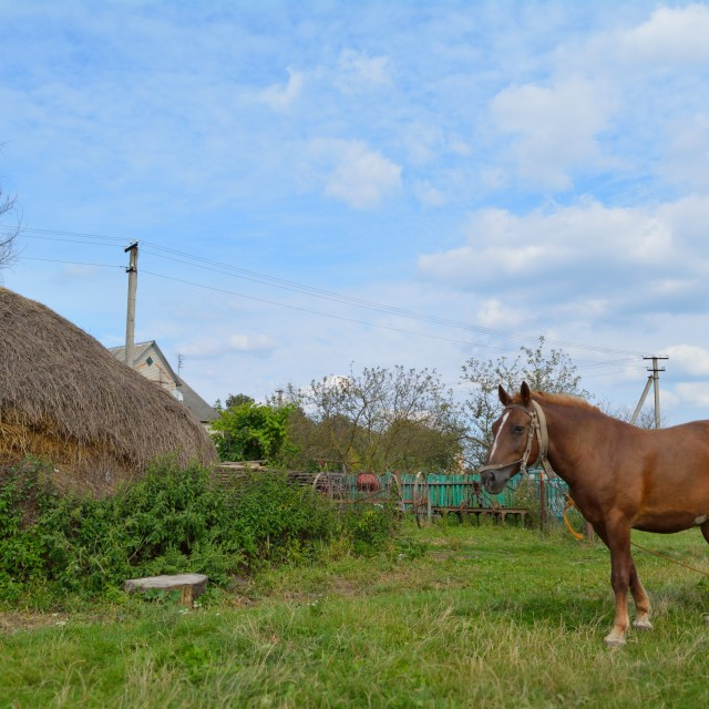 """""""Countryside with a horse"""" stock image"""