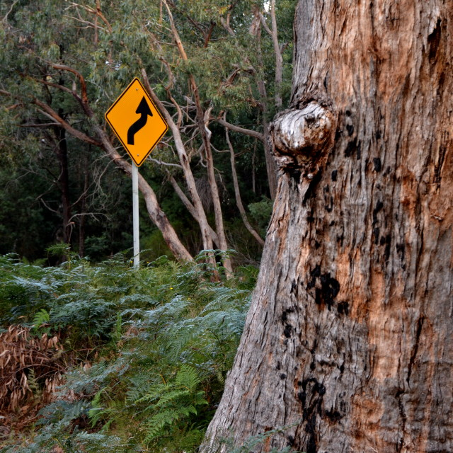 """""""Road sign in the Bush"""" stock image"""