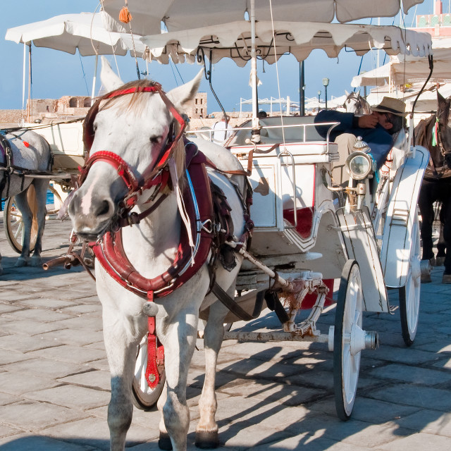 """Pony and Carriage, Crete"" stock image"