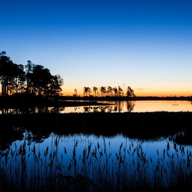 """Chincoteague at Dawn"" stock image"