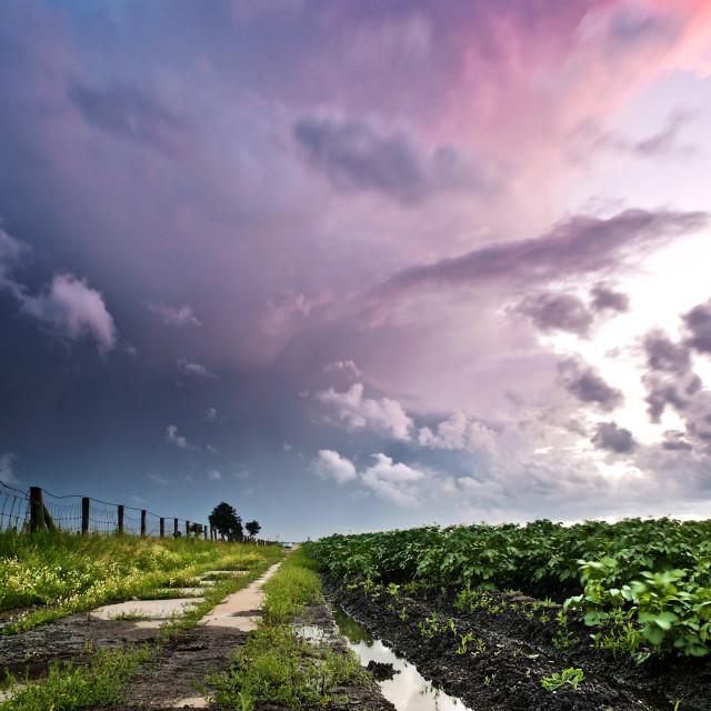"""Storm over the potato fields"" stock image"