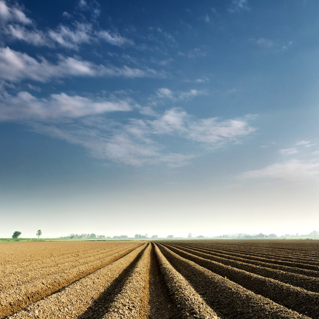 """Flat Farmlands"" stock image"