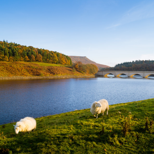 """Inhabitants of the English Countryside"" stock image"