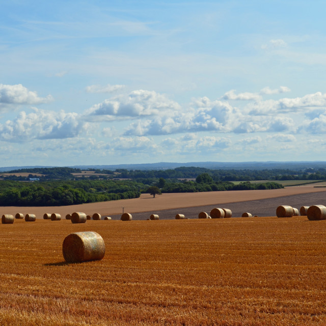 """Hay bales on the South Downs."" stock image"