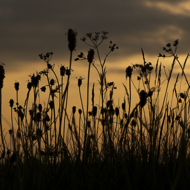 """""""Grass seed heads"""" stock image"""