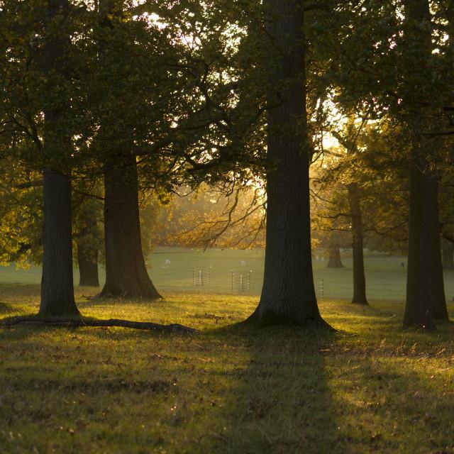 """Trees sunset"" stock image"