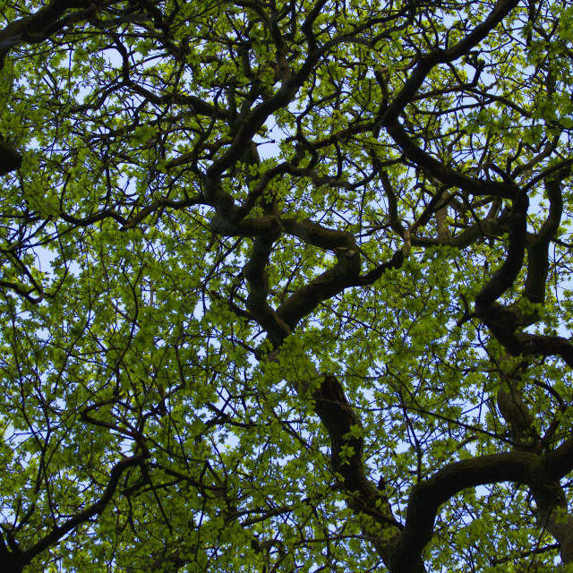 """""""Curly Branches"""" stock image"""