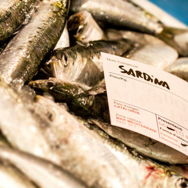 """Fresh Sardines"" stock image"
