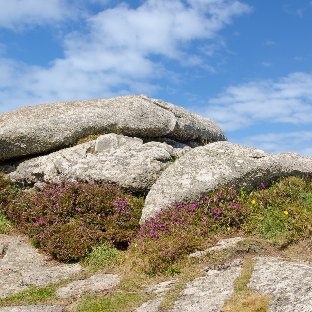 """Heather sheltered by a Cornish Tor"" stock image"