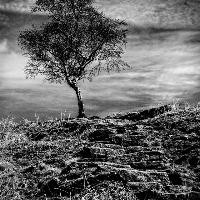 """Tree, Peak District"" stock image"