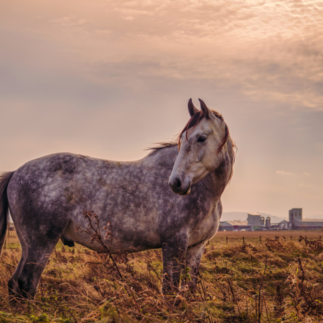 """Horse at Sunset"" stock image"